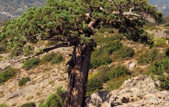 JUNIPERCY: Improving the conservation status of the priority habitat type 9560 in Cyprus