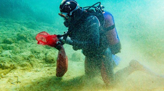 "Beach & Seabed Cleanups_Malta ""Zero Waste Beach"" project"